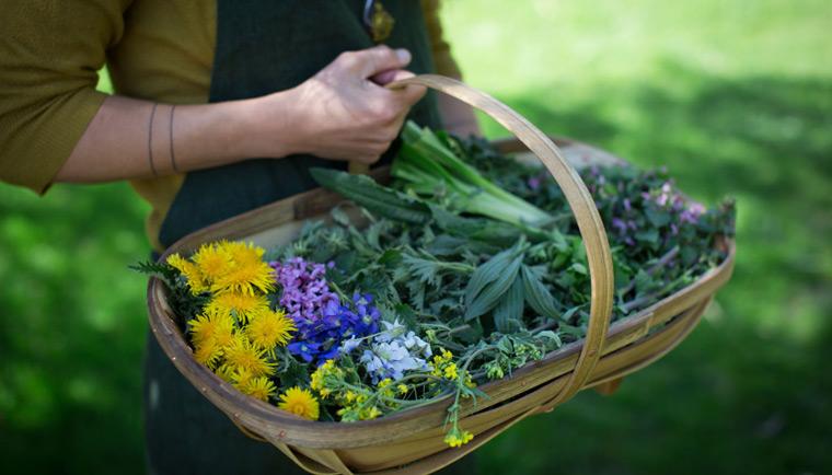 Jaké bylinky sbírat v červnu a jejich účinky
