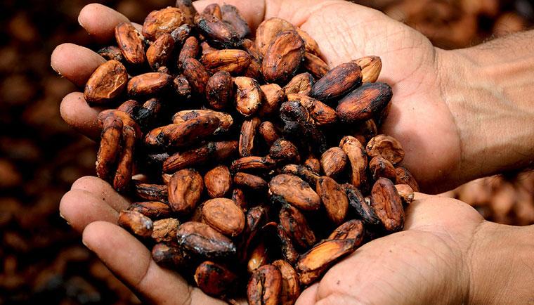 Kakaové máslo - nejlepší zvlhčovač pokožky