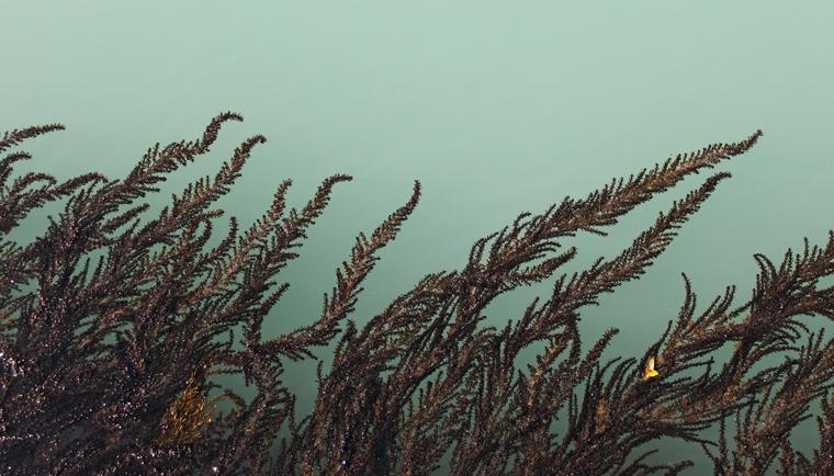 Účinky mořských řas v anti-aging kosmetice