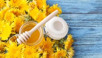 8 skvělých receptů z pampelišky - využijte její léčivé účinky