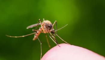 Poražte bodavý hmyz přírodně a bez chemie