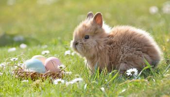 Jak si udělat zdravější Velikonoce