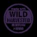 Wild Harvested Siberian Herbs - Sběr divoce rostoucích bylin