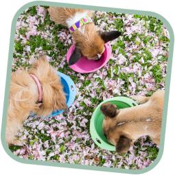 Pes pre-miska, BecoBowl Travel-růžový M, EKO